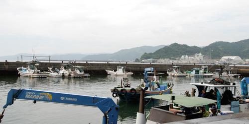 須崎魚市場