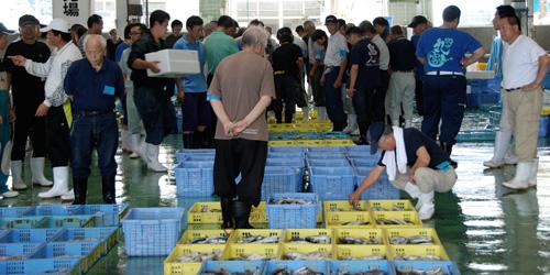 須崎魚市場のセリ模様